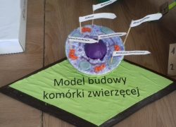 "Projekt edukacyjny ,,Komórka 3D"""