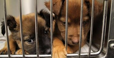 Niesiemy pomoc dla schroniska zwierząt wBoguchwale.