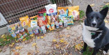 Zbiórka karmy dla schroniska dla zwierząt wBoguchwale